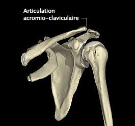 ac-anatomie-1