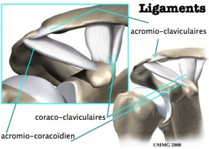 ac-anatomie-2