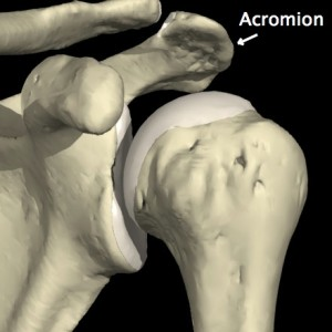 image-acromion